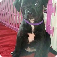 Adopt A Pet :: LoLo Jones - Wyoming, MI