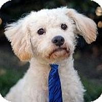 Adopt A Pet :: Bailey - Atascadero, CA