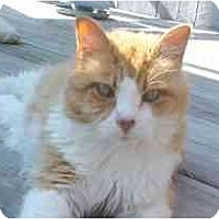 Adopt A Pet :: Husa - Lunenburg, MA