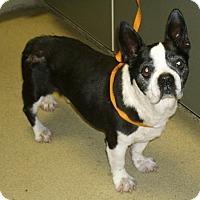 Adopt A Pet :: Carson - Temecula, CA
