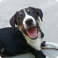 Adopt A Pet :: Harvey*ADOPTED!* - Chicago, IL