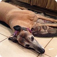 Adopt A Pet :: Olivia - Oklahoma City, OK