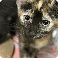 Adopt A Pet :: Charity - Medina, OH