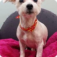 Adopt A Pet :: Freddy - Lawrenceville, GA