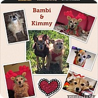 Adopt A Pet :: Kimmy and Babi - hollywood, FL