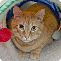 Adopt A Pet :: Vincent - Wilmington, DE