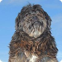 Adopt A Pet :: Charlie - Joplin, MO