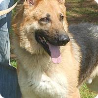 German Shepherd Dog Dog for adoption in Holly Hill, South Carolina - Rocky