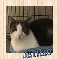 Adopt A Pet :: Jethro - Westbury, NY