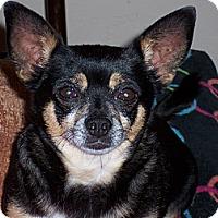Adopt A Pet :: Louie - Tucson, AZ