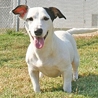 Terrier (Unknown Type, Medium) Mix Dog for adoption in Savannah, Tennessee - Qu'y
