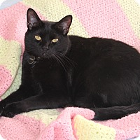 Adopt A Pet :: Ebbo - Nolensville, TN