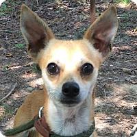 Adopt A Pet :: Linnie - Brattleboro, VT