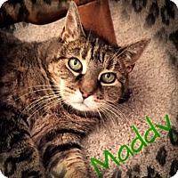 Adopt A Pet :: Maddy - Ronkonkoma, NY