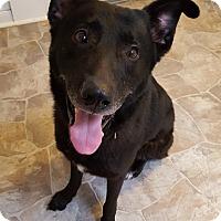 Adopt A Pet :: Harley - Fennville, MI