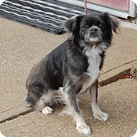 Adopt A Pet :: Lil Bit - North Judson, IN