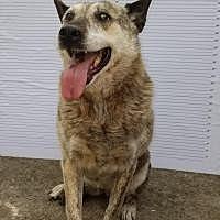 Adopt A Pet :: Angel - Winnsboro, SC