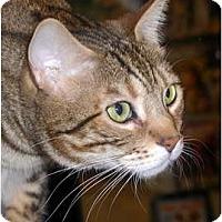 Adopt A Pet :: Tigger - Encinitas, CA