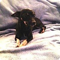 Adopt A Pet :: Betty aka Ladybug - Alexandria, VA