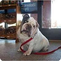 Adopt A Pet :: Jake*adoption pending* - Gilbert, AZ