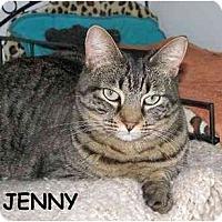 Adopt A Pet :: Jenny - AUSTIN, TX