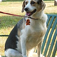 Adopt A Pet :: Sadie - Indianapolis, IN