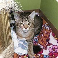 Adopt A Pet :: Trish - Dover, OH