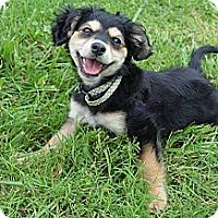 Adopt A Pet :: Bella Rae - Bedminster, NJ
