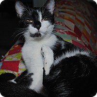 Adopt A Pet :: Itsy - Waxhaw, NC