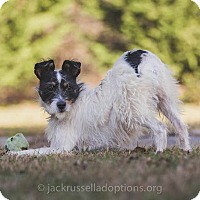 Adopt A Pet :: Penelope - Conyers, GA