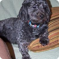 Adopt A Pet :: Howie - Framingham, MA