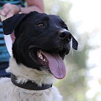 Adopt A Pet :: Doc - Salina, UT