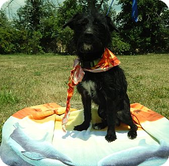 Terrier (Unknown Type, Small) Mix Dog for adoption in Bucyrus, Ohio - Friday