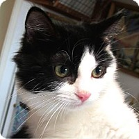 Adopt A Pet :: Lola - Davis, CA