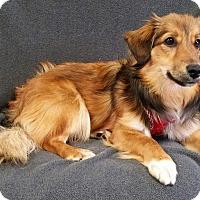 Adopt A Pet :: Ryder Turner - Urbana, OH