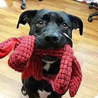Adopt A Pet :: Tyson- SPONSORED! - Lisbon, OH