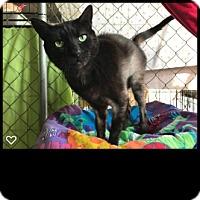 Adopt A Pet :: Bandit - Fallbrook, CA