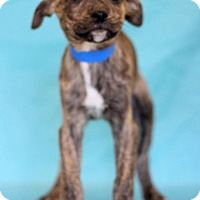 Adopt A Pet :: Nationals - Waldorf, MD