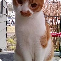 Adopt A Pet :: Edgar - Calverton, NY