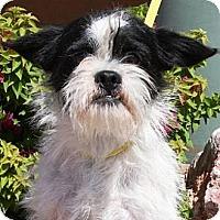 Adopt A Pet :: Fred - Gilbert, AZ