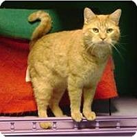 Adopt A Pet :: Piffle - Topeka, KS