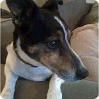 Adopt A Pet :: Mack in Houston - Houston, TX
