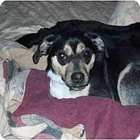 Adopt A Pet :: Sandy - Johnsburg, IL