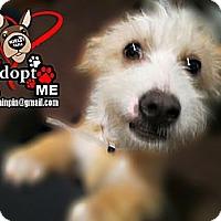 Adopt A Pet :: Gustavo - Huntington Beach, CA
