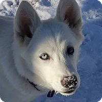 Adopt A Pet :: Moirai - Geneseo, IL