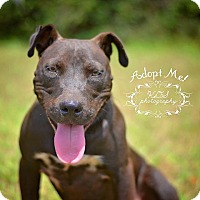 Adopt A Pet :: Jace - Fort Valley, GA