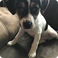 Adopt A Pet :: Sporty Spice - Racine, WI