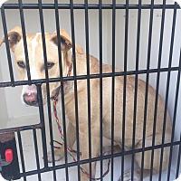 Adopt A Pet :: Buttercup - Humble, TX
