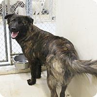 Adopt A Pet :: A13 Sonya - Odessa, TX