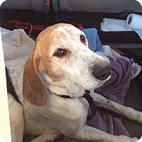 Adopt A Pet :: Duke - Blue Ridge, GA